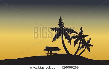 palm trees sunset golden of silhouette at sunset