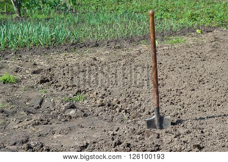 Shovel Dug in the ground garden. Manual Labor.