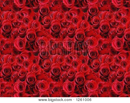 Lots Of Roses