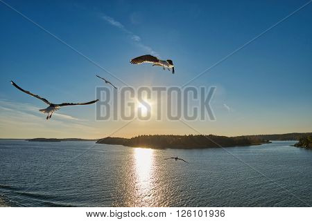 Colorful Background with Sea Gulls