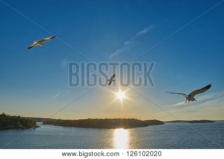Three Sea Gulls flying over sea, islands and forest