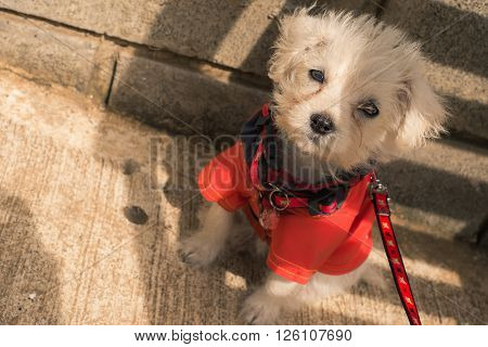 New Born Puppy Dog with a Red Coat