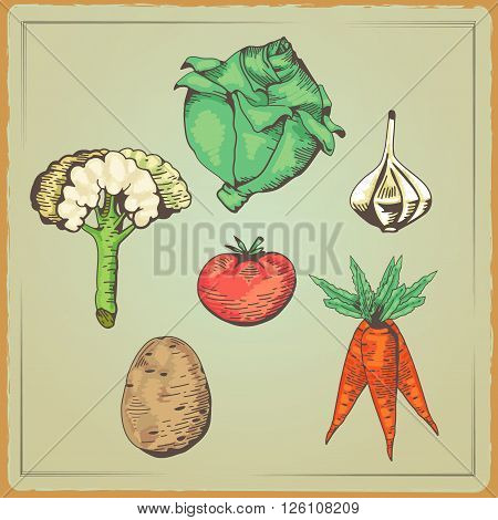 Set of Vegetables organic food. Outline Vector illustration tomato. Cabbage. Carrots. Cauliflower. Garlic. Potato. Vegetarian concept collection. Vector Illustration in a Engraving style