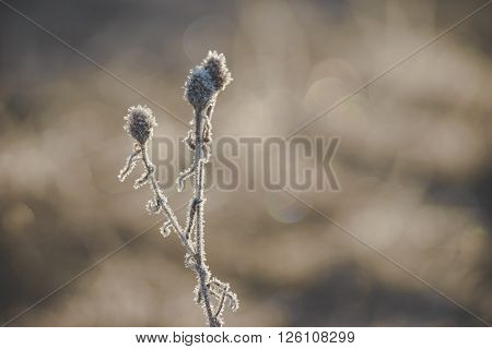 Natural background from frozen plant covered with hoarfrost