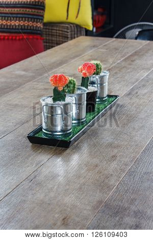 Cactus on wood table background decoration conceot