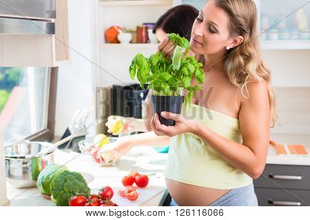 Two pregnant best friends preparing healthy food sniffing at basil