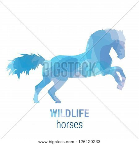 Wildlife banner on white background. Colored watercolor silhouette horse. Poster for mammals journey park culture.
