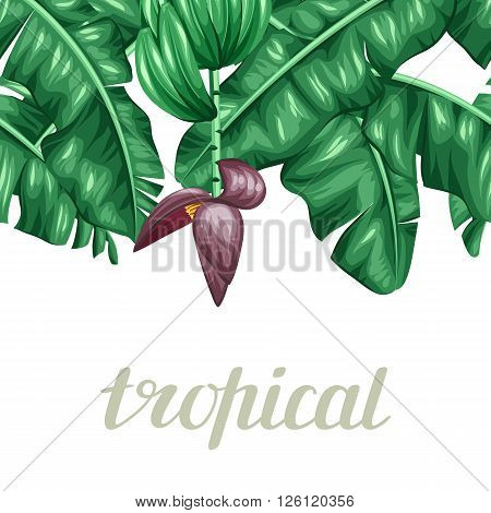 Seamless border with banana leaves. Decorative image of tropical foliage, flowers and fruits. Background made without clipping mask. Easy to use for backdrop, textile, wrapping paper.