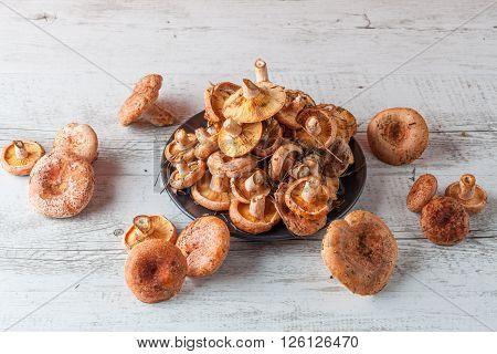 Bunch Of Orange Saffron Milk Cap Mushrooms