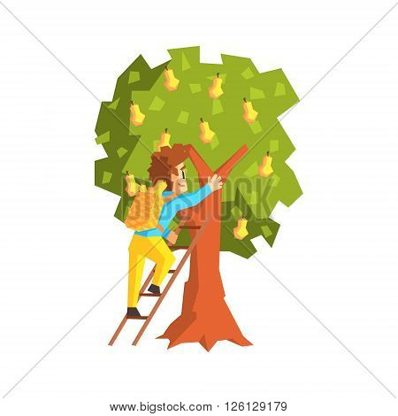 Guy Hand Picking Pears With Ladder Primitive Geometric Cartoon Style Flat Vector Design Isolated Illustration