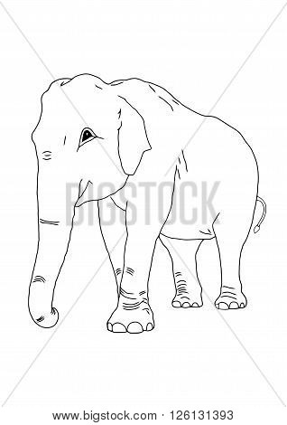 The art of elephant on the isolated background