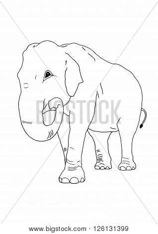 The vector of elephant on the isolated background