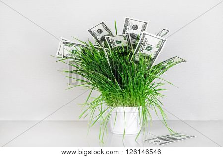 Dollars in grass. Hundred dollar bills in a pot with green grass on a gray background. Fake money. Conceptual image on the business theme.