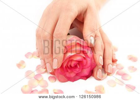 Woman hands with beautiful rose and petals on white background, close up