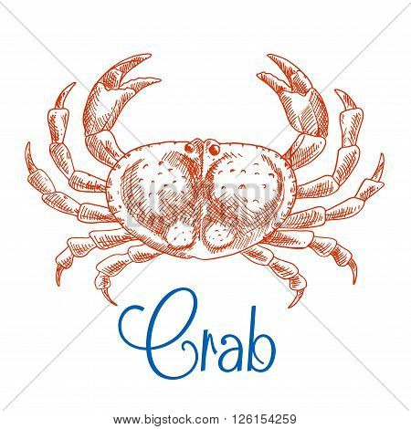 Large red ocean crab isolated sketch icon with raised pincers and text Crab below. Seafood menu, zoo aquarium mascot, t-shirt print design usage