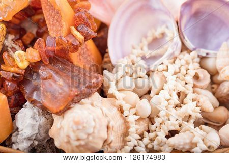 Background of seashells and amber gem