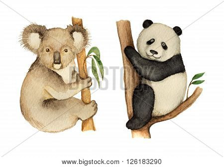 Watercolor Koala and Panda sitting on the tree. Cute bears for the zoological design.