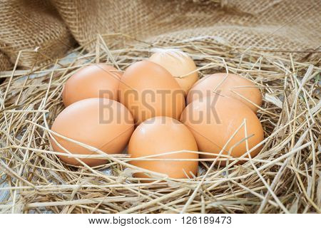Brown eggs in hay eggs in nest hen eggs. Sackcloth background