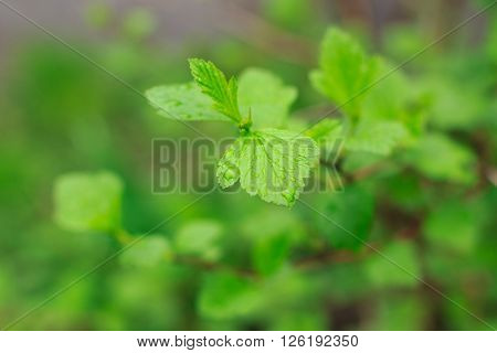 nice green leaves on a tree branch