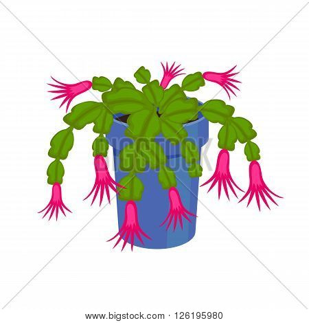 Flowering Cactus in a pot - home flower. Vector illustration.