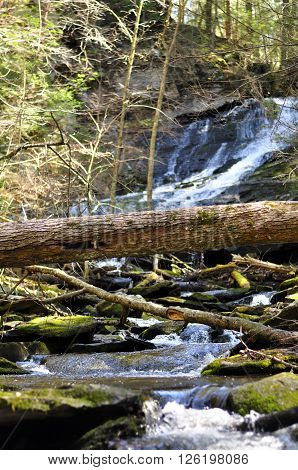 A fallen tree across the water coming off of the Dean's Ravine waterfall on the mohawk trail in Falls Village Connecticut in the spring.