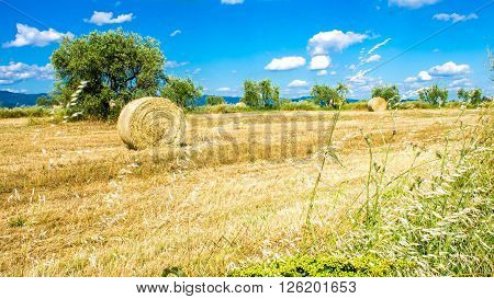 Panoramic view of a field with round bales of dried hay