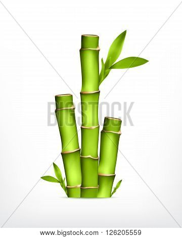 Bamboo. Stem of bamboo with leaves. Vector icon. EPS10