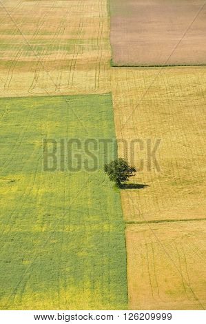 A solitary tree in the middle of fields. Could represent being alone or out of place.