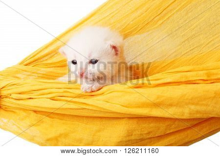 White kitten in a yellow hammock. Cute white kitten in a hammock having rest, isolated at white. Adorable pet. Small heartwarming kitten. Little cat. Animal isolated. High key