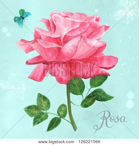 A pink watercolor rose on a blue background hand painted in vintage botanical art style with the Latin word 'Rosa' in calligraphy and a teal blue butterfly; post card or banner design template