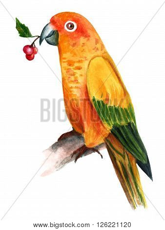 A watercolor drawing of a golden colored parrot holding a bunch of berries in its beak sitting on a blurred tree branch hand painted on white background vintage style
