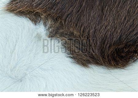 a horse fur close up, skin animal