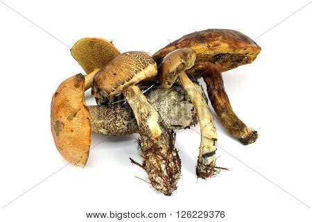 A lot of different edible mushrooms on a white background