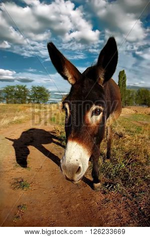 Wide-angle shot of a donkey looking into camera casting a long shadow