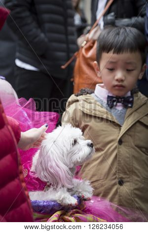 NEW YORK - MAR 27 2016: A dog wearing an Easter costume is petted by kids while sitting in a stroller on 5th Ave Easter Sunday at the traditional Easter Bonnet Parade in Manhattan on March 27, 2016.
