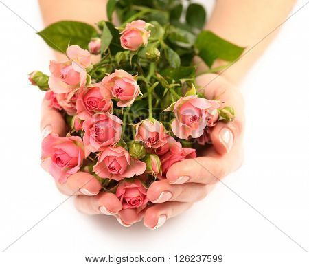 Woman hands with beautiful  roses on white background, close up