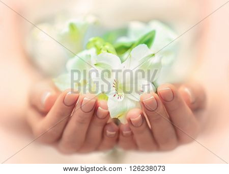 Woman hands with beautiful flowers, close up