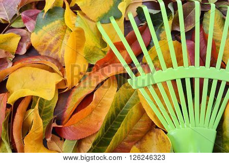 Autumn Fall background with colourful autumn leaves and green rak with copy space.