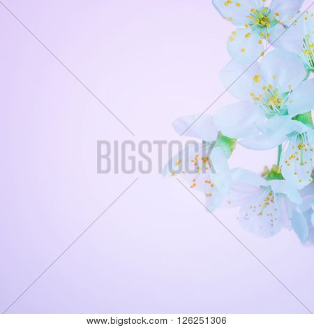 Beautiful blooming spring flowers, cherry tree blossom, abstract floral border on pink background, macro photography, photo suitable for greeting cards for spring holidays like Easter or Mother's day