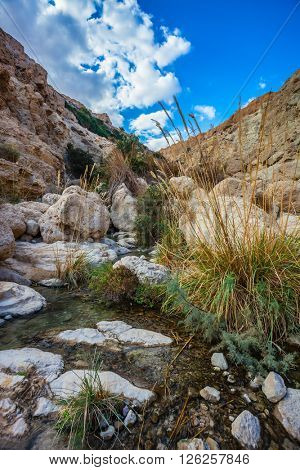 Typical landscape of the Middle East. The stream flows through the beautiful gorge Ein Gedi, Israel