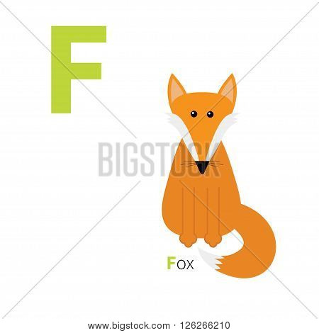 Letter F Fox Zoo alphabet. English abc with animals Education cards for kids Isolated White background Flat design Vector illustration