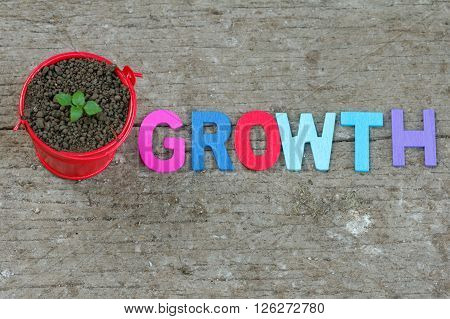 Young sprout in small little red pail with word GROWTH beside it. Concept.