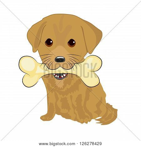 portrait of cute labrador puppy holding big bone with mouth isolated on white background