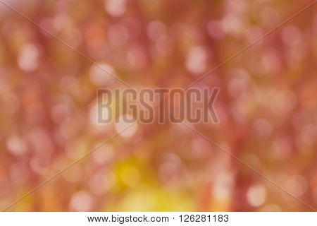 Spark And Blow Natural Bokeh In Wonderful Fantasy Pink Orange Pastel Abstract Dreamy Spring Blossom