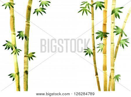 watercolor bamboo grove, fresh bamboo stalks, green bamboo forest, hand drawn illustration