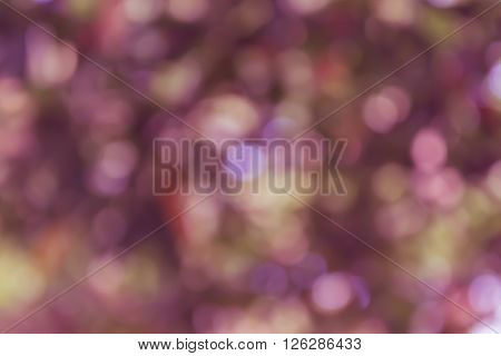 Colourful Spark And Blow Natural Bokeh  In Wonderful Fantasy Violet Purple Pastel Spring Blossom Bac