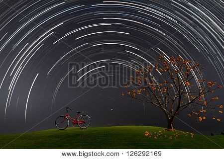 Bicycle and yellow flower tree on grass field at night with star trail spinning around the star Polaris