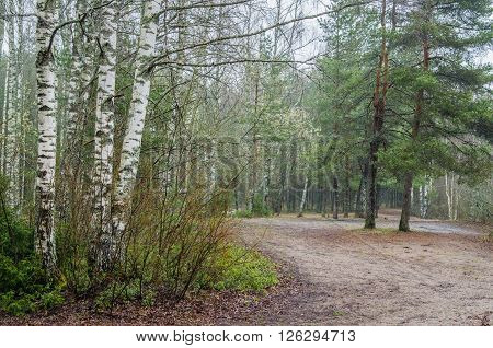 Foggy spring landscape with footpath in the woods