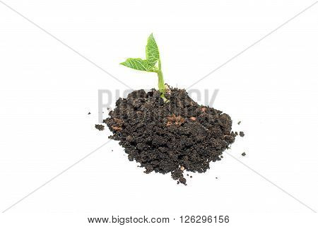 Green plants sprout up from the ground pile