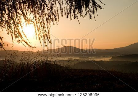 Sunrise Landscape.early Morning View To Horizon Through Larch Twigs